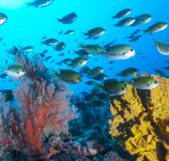 5 reasons to dive Australia's pristine southern-most coral reef